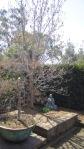 objet lourd dans le jardin feng shui