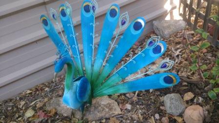 peacock in the garden