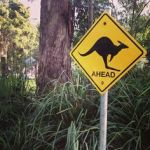 road sign kangaroo